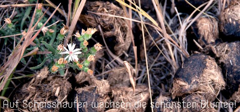 Auf Scheisshaufen wachsen die schönsten Blumen